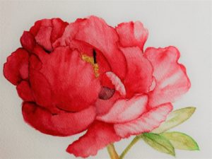 Read more about the article «Paeonia»